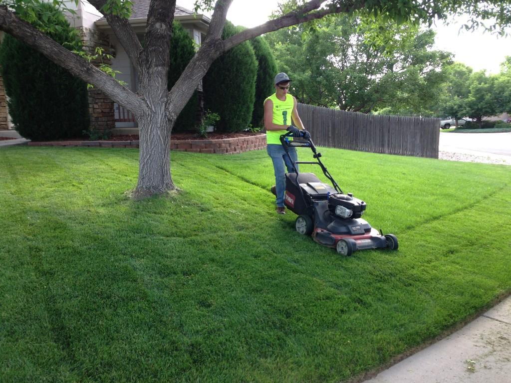 Essence of artificial grass